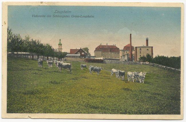 Lauheim Viehweide des Schlossgutes Gross-Laupheim (Vorderseite der Ansichtskarte)